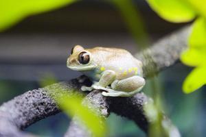 Comment faire un terrarium pour les grenouilles