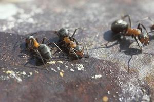 Comment arrêter les fourmis à venir dans la maison
