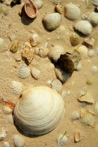 Seashell Mirror bricolage