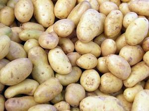 Les pommes de terre sont meurtris Nocif?