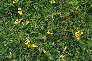 Comment Étaler plantes couvre-sol
