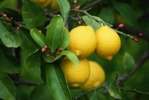 Idées de restauration avec arbres fruitiers