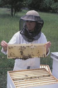 Comment coudre une abeille Veil