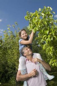 Comment prendre soin des arbres fruitiers dans le Kentucky