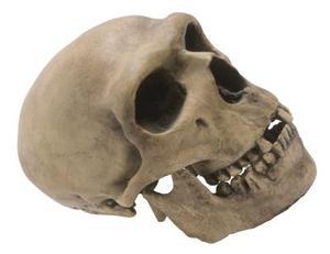 Comment faire Pommettes squelette avec maquillage d'Halloween