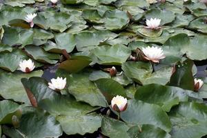 La meilleure façon de plantes Étang Flore
