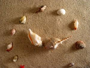 Seashell Centerpiece Idées