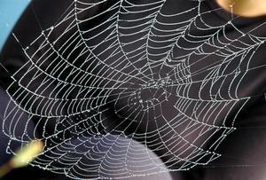 Comment faire de la soie d'araignée Roses
