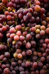 Comment Greffer Wine Grapes