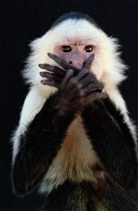 Comment prendre soin de capucins Monkeys