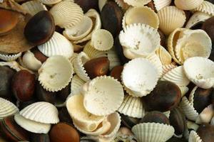 Ocean thème Arts & Crafts