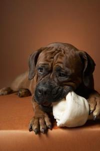 Les effets de cuir brut à mâcher sur les chiens