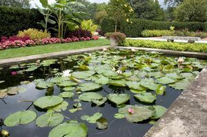 Comment nettoyer les étangs de jardin
