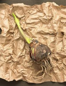 Pourquoi les racines d'une plante à pousser vers le bas?