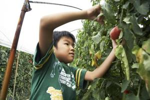 Comment cultiver des plants de tomates pour les enfants