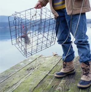 Comment faire une cage de crabe