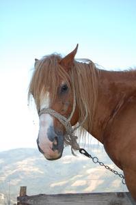 Comment faire un cadre de fil pour un cheval en papier mâché