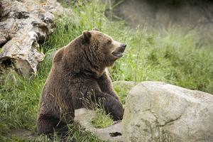 Comment faire la tête pour un costume d'ours