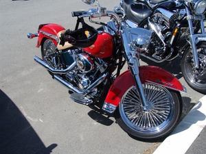 Comment puis-je installer un siège bagarreur sur une Harley Softail 2002?