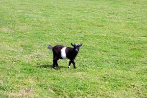 Comment construire une Maison de chèvre