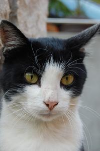 Quels sont certains des médicaments pour les chats atteints d'une maladie de la thyroïde?