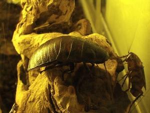 Roach Bait Recette