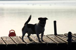 Comment faire des plans pour un chien Combinaison Vest