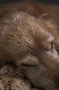 Effets secondaires de clindamycine pour chiens
