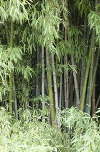 Comment creuser et bambou refendu