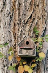 comment fixer un nichoir un arbre. Black Bedroom Furniture Sets. Home Design Ideas