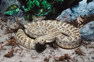 Lois de tuer les serpents dans le Tennessee