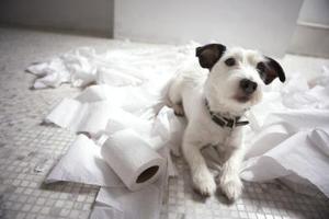Comment faire votre propre Pet Loo