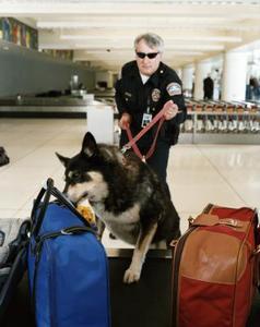 Le salaire d'un maître-chien professionnel